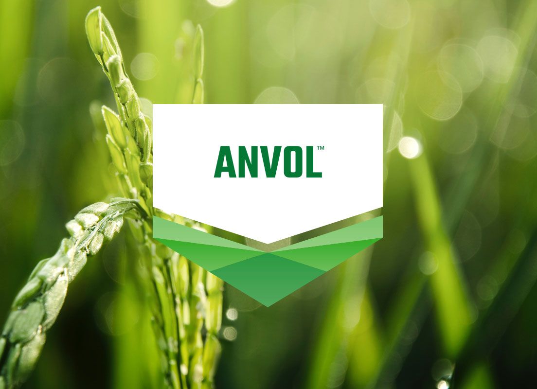 ANVOL logo overlaid on a rice crop