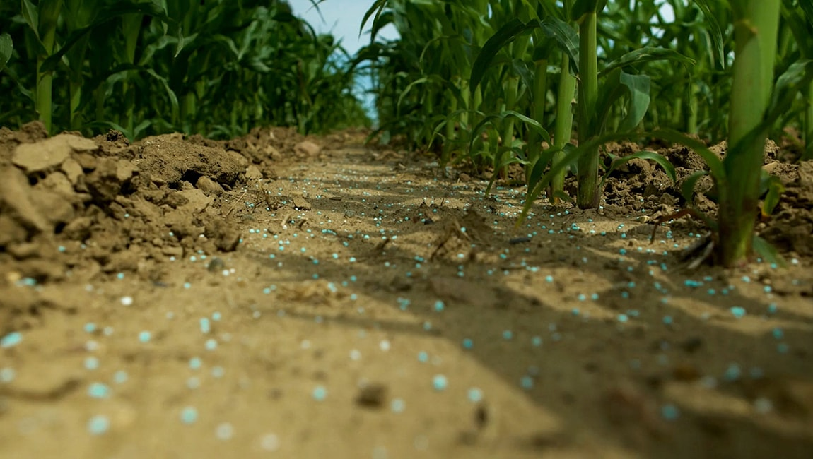 SUPERU granules on the soil of a corn crop