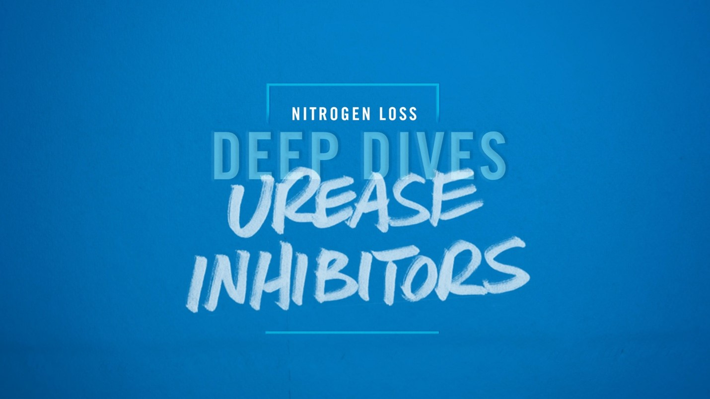 Deep Dive Video on Urease Inhibitors