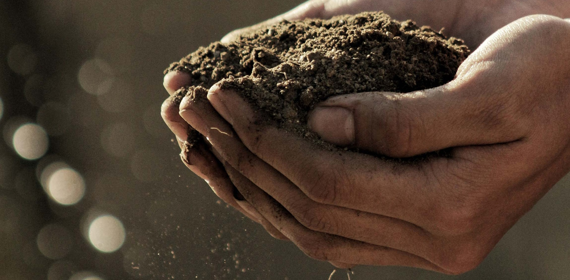 A close up shot of a farmer holding soil